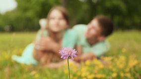 Guy and girl lying on the grass on the lawn. In the foreground purple flower. stock footage