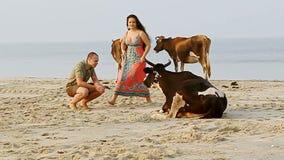 Guy Girl Stand Kiss op Zandstrand dicht bij Koeien door Oceaanbranding stock footage