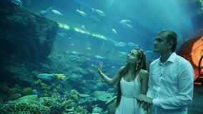 Guy and Girl walk on an underwater aquarium. Dubai Mall stock footage