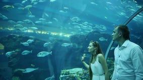 Guy and Girl walk on an underwater aquarium. Dubai Mall stock video