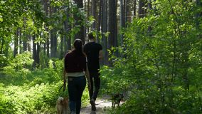 The guy and the girl are walking through the forest. The guy and the girl are walking through the green forest stock video footage