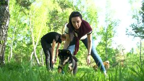 A guy and a girl are walking in the woods with dogs. Of the breed of shiba stock video footage