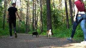 A guy and a girl are walking in the woods with dogs. Of the breed of shiba stock video