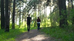 A guy and a girl are walking in the woods with dogs. Of the breed of shiba stock footage