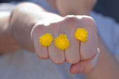 Guy giving a punch with flowers. Guy giving a punch with yellow flowers Stock Images