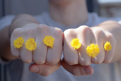 Guy giving a punch with flowers. Guy giving a punch with yellow flowers Royalty Free Stock Images