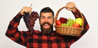 Farmer with happy face presents apples, cranberries and ripe grapes stock images