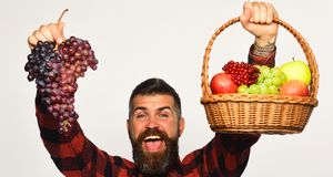Guy with harvest. Man with beard holds basket with fruit. And bunch of purple grapes on white background. Farmer with happy face presents apples, cranberries stock image