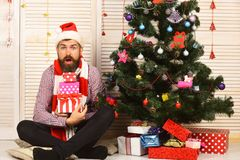 Guy in hat and scarf by Christmas tree and presents. Guy in hat and scarf sits by Christmas tree and presents. Man with beard holds present boxes. Santa Claus stock photos