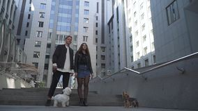 The guy and his walk with dogs in the city. Young couple rests with their dogs at the city. Man and woman stand near each other in the foreground of high stock video footage