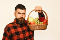 Guy holds homegrown harvest. Farming and autumn crops concept. Man with beard holds basket with fruit on white background. Farmer with strict face presents stock image