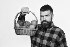 Guy holds homegrown harvest. Farming and autumn crops concept. Man with beard holds basket with fruit isolated on white background. Farmer with strict face stock image
