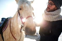 Guy and horse Stock Photography