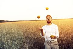 The guy juggles with apples. The guy juggles with green apples. bearded man in a white shirt in a wheat field on a hot bright summer day Stock Photo