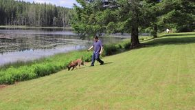 Guy at lake with a dog. Young man walking a dog next to a lake stock video footage