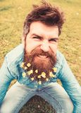 Guy with lesser celandine flowers in beard taking selfie photo. Hipster with angry grimace on face taking selfie photo. Mad mood concept. Man enjoys spring stock photos