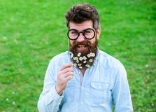 Guy looks nicely with daisy or chamomile flowers in beard. Man with long beard and mustache, defocused green background. Hipster with beard on smiling face Stock Image