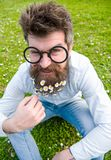 Guy looks nicely with daisy or chamomile flowers in beard. Springtime concept. Man with long beard and mustache. Defocused green background. Hipster with beard Stock Photo