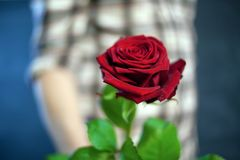 The guy in the plaid shirt holds a red rose in his hand Stock Photos