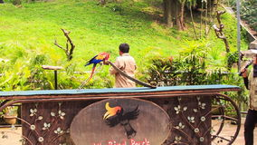 Guy Shows Parrot Tricks with Slide in KL Bird Park. KUALA LUMPUR/MALAYSIA - MARCH 23 2016: Local guy shows slide tricks with blue-gold Macaw parrots on special stock footage