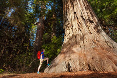 Guy stands near big tree in Redwood California Stock Photo