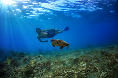 A guy swimming with turtle underwater royalty free stock images