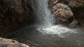 Guy Swims en piscina del río en el pie de la cascada en parque almacen de metraje de vídeo