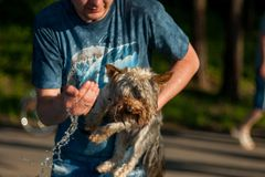 The guy washes the dog with cold water stock image