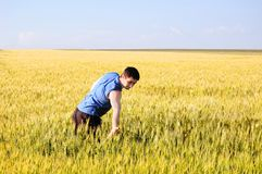 The guy in a wheaten field Stock Image