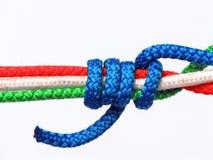 Guzek tricolor, Włochy obrazy stock
