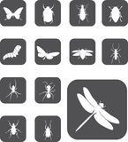 guzika 24 insekta ustawiają z Obraz Stock