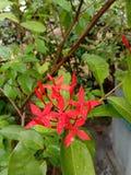 Guzika kwiat obrazy stock