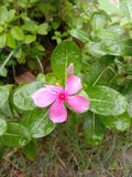 Guzika kwiat obraz stock