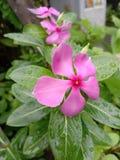 Guzika kwiat zdjęcia royalty free