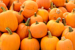 GV Pumpkins Stock Photography