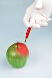 GVO-Apfel Stockbilder