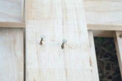 Gwóźdź w drewnianej desce Zdjęcie Royalty Free