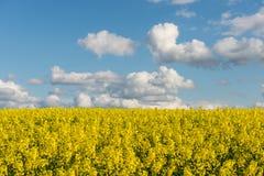 Gwałtów pola w kraju pod niebieskim niebem z białymi chmurami Obraz Royalty Free
