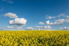 Gwałtów pola w kraju pod niebieskim niebem z białymi chmurami Zdjęcie Stock