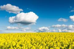 Gwałtów pola w kraju pod niebieskim niebem z białymi chmurami Fotografia Royalty Free
