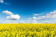 Gwałtów pola w kraju pod niebieskim niebem z białymi chmurami Zdjęcia Stock