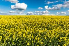 Gwałtów pola w kraju pod niebieskim niebem z białymi chmurami Fotografia Stock