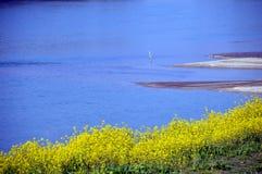 Gwałt kwitnie na nadrzecznego, japończyka krajobrazie w Marzec/ Zdjęcie Royalty Free
