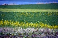 Gwałt kwitnie na nadrzecznego, japończyka krajobrazie w Marzec/ Obraz Stock