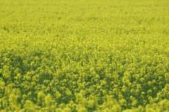 gwałta kolor żółty fotografia stock