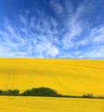 Gwałta pole pod ładnym niebem Obrazy Royalty Free