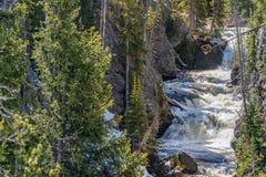 Gwałtowni na rzece w Yellowstone zdjęcie stock