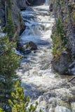 Gwałtowni na rzece w Yellowstone zdjęcia royalty free