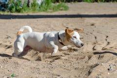 Gwałtownego pies fotografia royalty free