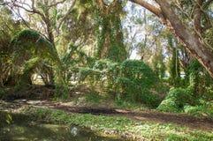 Gwelup, Westelijk Australië: Geheime Tuin Stock Afbeelding